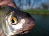 Rybolov na Váhu